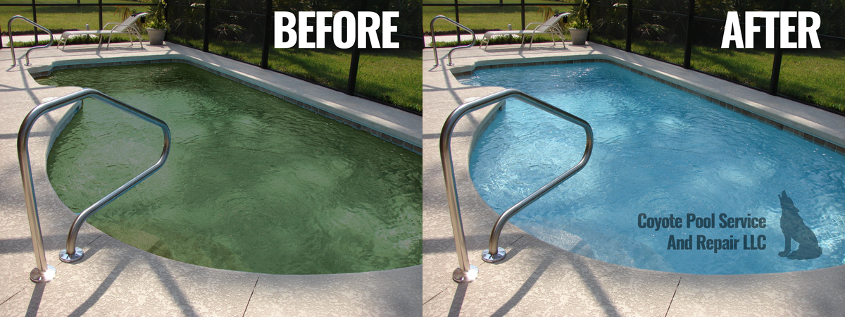 Murky And Green Pool Cleaning |